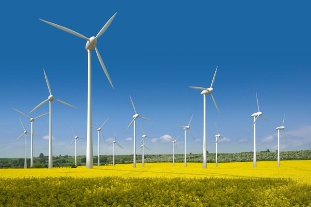 Wind turbines in a rapeseed field