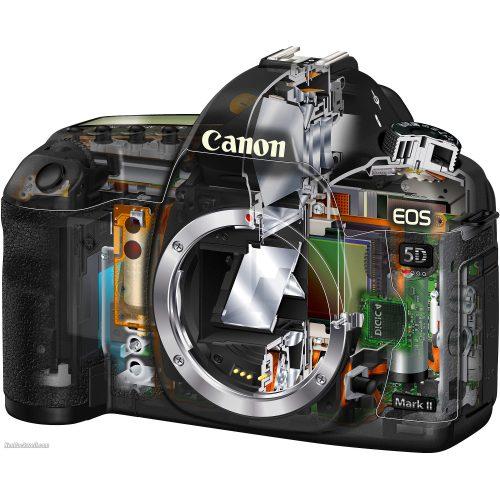 Medium Crop Of Canon 5d Mark V
