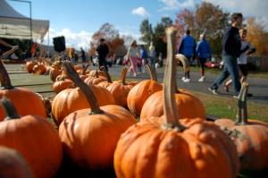 Pumpkin run 2010-41
