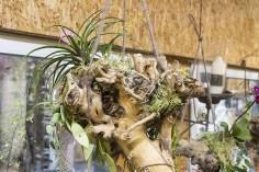 Orchideenausstellung 8-1