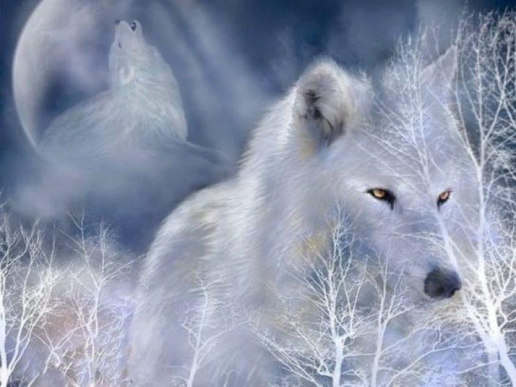 320659__white-wolf_p
