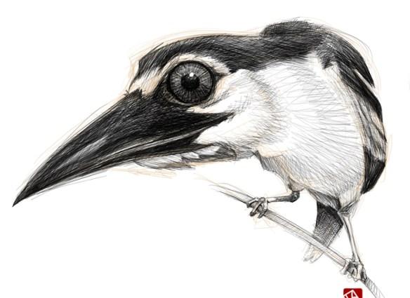 Sketchy-bird-01