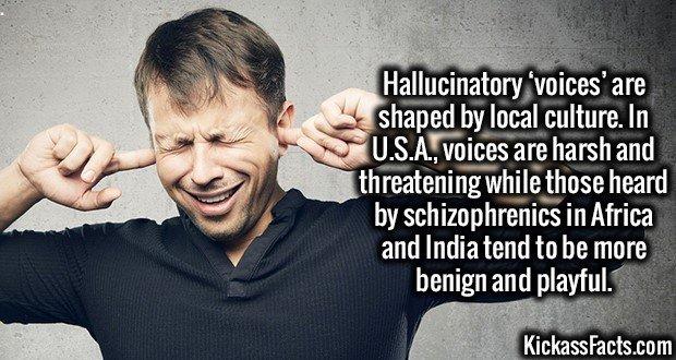1813 Hallucinatory voices
