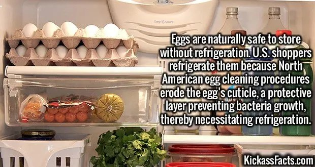 2495 Eggs-Eggs are naturally safe to store without refrigeration. U.S. shoppers refrigerate them because North American egg cleaning procedures erode the egg's cuticle, a protective layer preventing bacteria growth, thereby necessitating refrigeration.