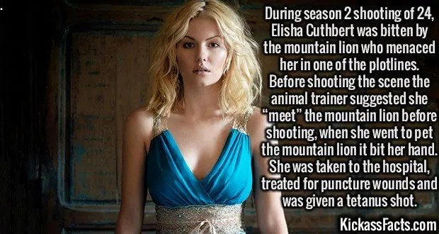 "2499 Elisha Cuthbert-During season 2 shooting of 24, Elisha Cuthbert was bitten by the mountain lion who menaced her in one of the plotlines. Before shooting the scene the animal trainer suggested she ""meet"" the mountain lion before shooting, when she went to pet the mountain lion it bit her hand. She was taken to the hospital, treated for puncture wounds and was given a tetanus shot."