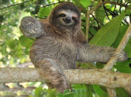 sloth-on-tree