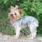 Dogs-of-KiddNation-Gracie
