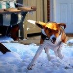 Dogs-of-KiddNation-Hank