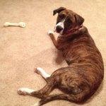 Dogs-of-KiddNation-Jessie-Pinkman