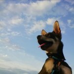 Dogs-of-KiddNation-Mighty-Max