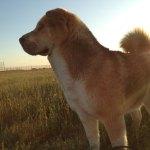 Dogs-of-KiddNation-Olsen