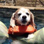 Dogs-of-KiddNation-Sadie