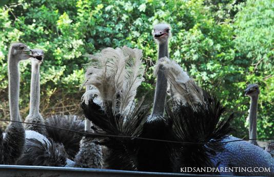 desauru-ostrich01