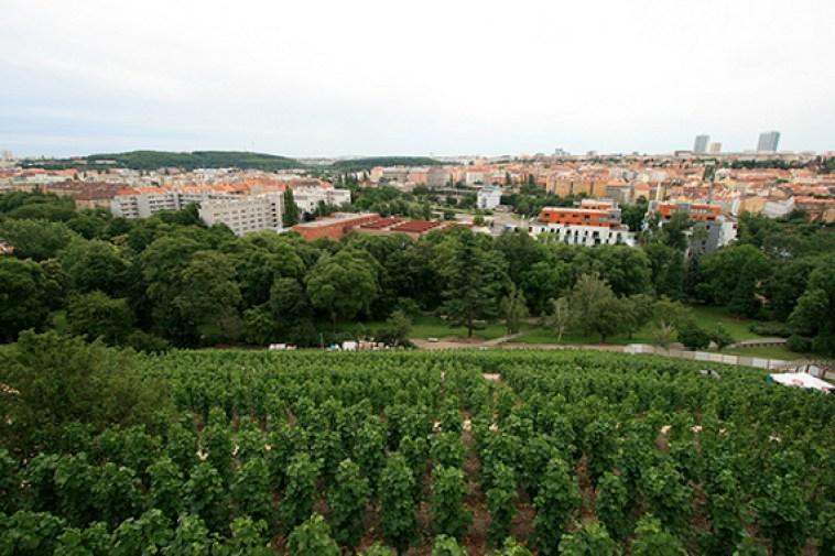 http://i2.wp.com/www.kidsinprague.com/images/uploads/grebovka-vineyard.jpg?resize=758%2C505