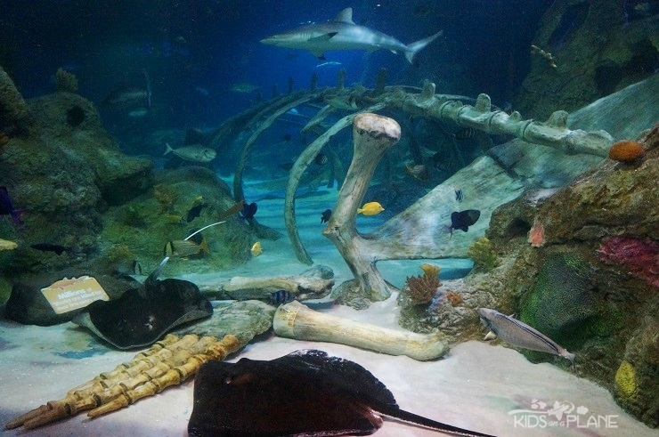 things to do with kids in grapevine texas sea life aquarium great for 1 or 2 hours. Black Bedroom Furniture Sets. Home Design Ideas