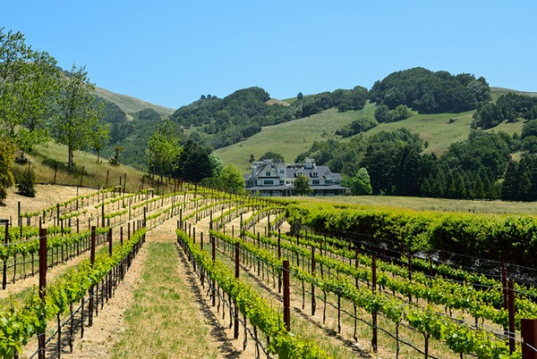 skywalkervineyards