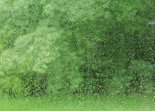 rain, green, Kim Manley Ort