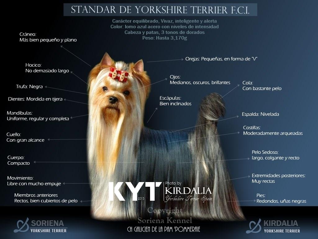 Yorkshire Terrier, Preguntas frecuentes