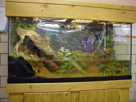 Fresh water tanks are great additions to any room. Contrary to popular