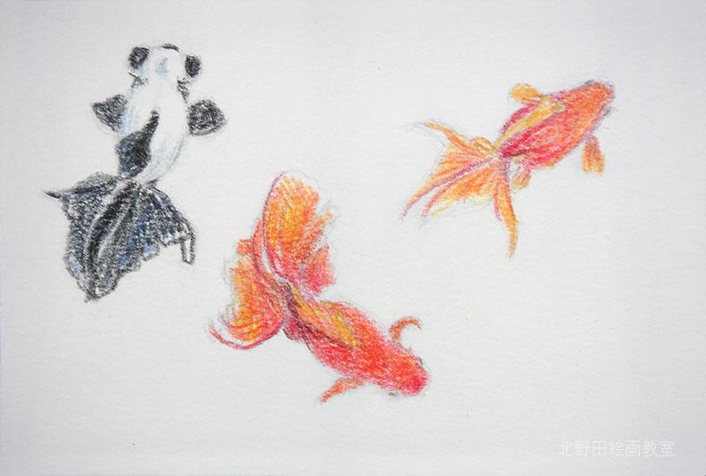 水彩色鉛筆の描き方(金魚)3