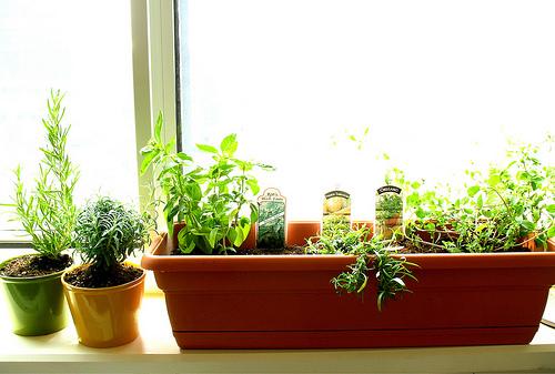 Herb kitchen garden