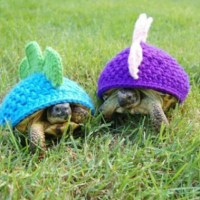 Turtle Outfits