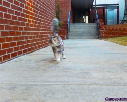 Cat at School