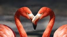 flamingo-600205_640