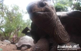 Prison-Island-Sansibar-Zanzibar_Turtle-1