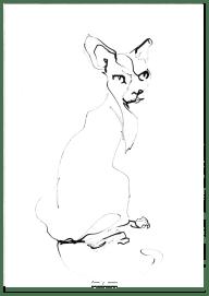 Cat 02