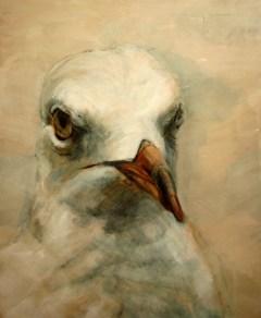 koetziervanhooff Meeuw 01 Seagull