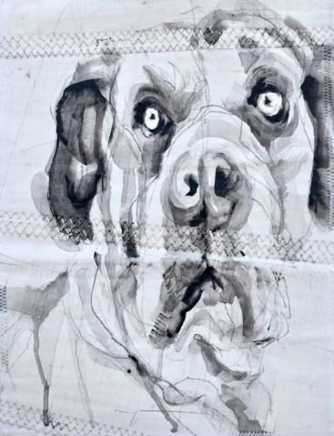 Dog on Sail