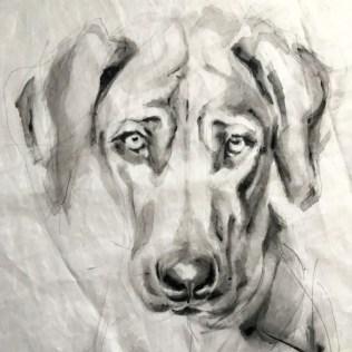 Portrait of Kees Dog