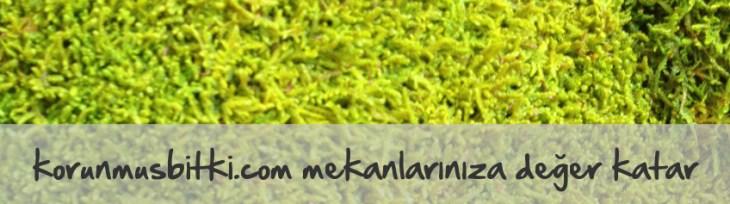 yosun_mekanlariniza_deger_katar_001