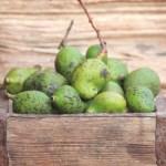 Uppu Manga Recipe – Uppilitta Kannimanga Recipe   Salted Tender Mangoes in Brine
