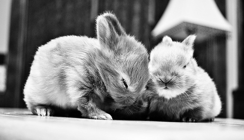 baby animal black and white photo