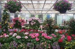 Pflanzen, Blumen, Töpfe