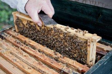 Bienen, Waben