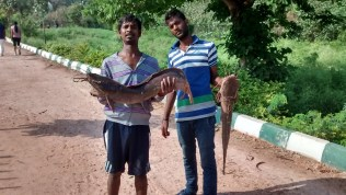 fish caught in the lake by local guys