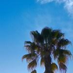 Sunny So Cal 3/52