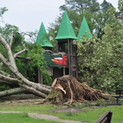 Cleanup Begins at Buford Park
