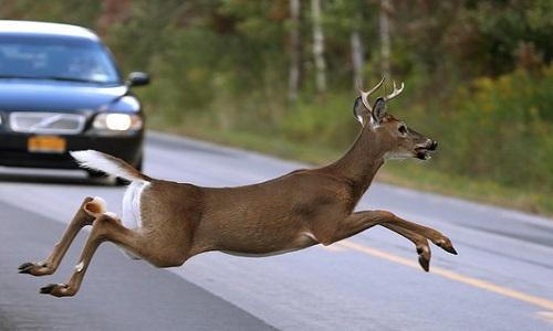 Cameron man injured after striking deer on I-35