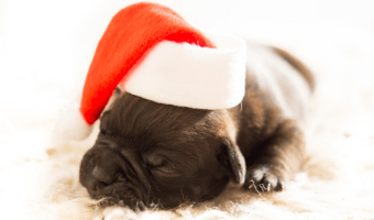 Making The Holidays Fun For Pets (And People!)