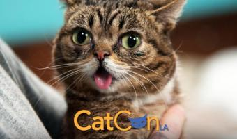 Kuddly Was At CatCon And It Was Epic!
