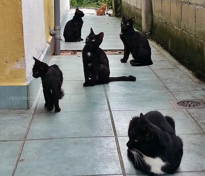 kucing jalanan terbiar