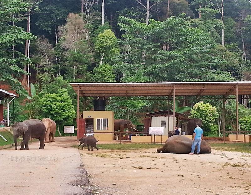 santuari gajah sungai ketiar