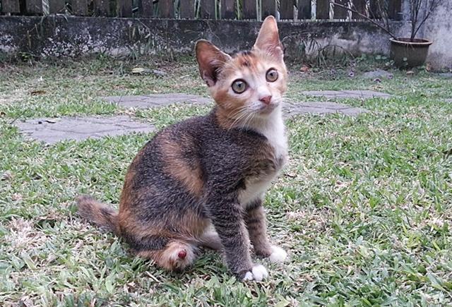kucing kudung2014-09-23 18.46.57-1