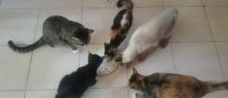 kucing mana tak makan ikan