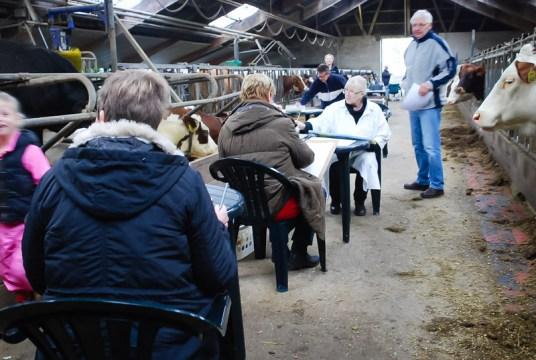 kunststichting-markelo-ksm-herfstworkshop-2015-koeien-schilderenDSC_6501