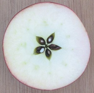 apple-star